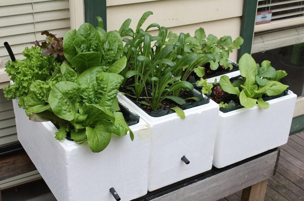 Gardening-cont