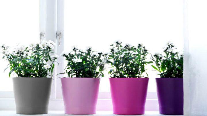 pots-for-plants