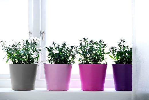 pots-for-plants