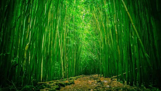 What Makes for the Usage of Bamboo to Bloom