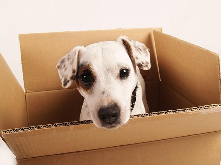 shipping pets