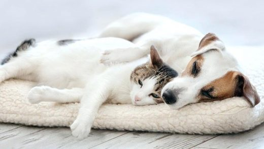 The Essential Pet Accessories to Have Before Bringing Your New Buddy Home