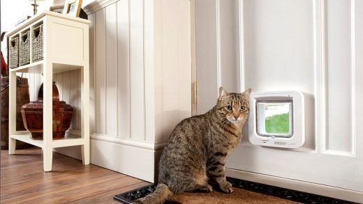 Cat Independence: The Benefits of a Door for Cats