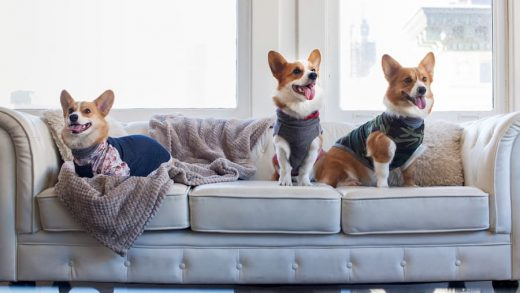 Puppy Clothes: Style and Comfort for your Furry BFF
