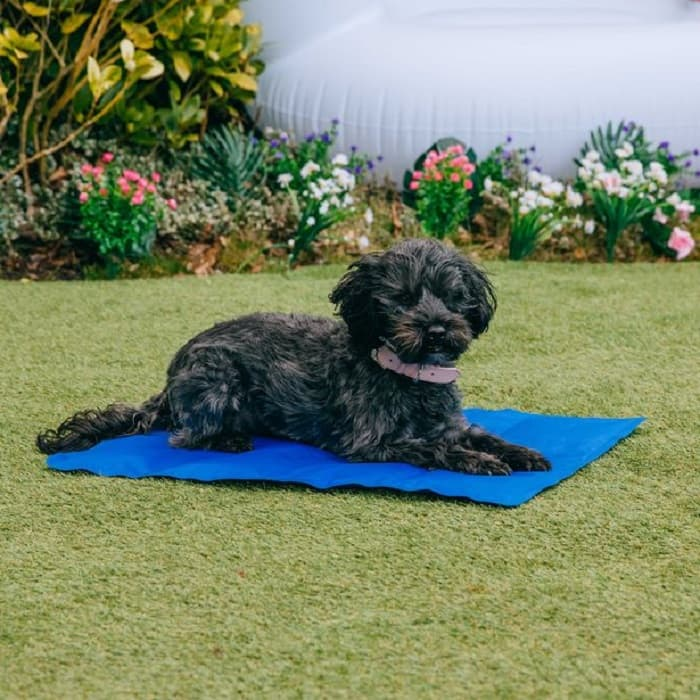 Do cooling beds for dogs work
