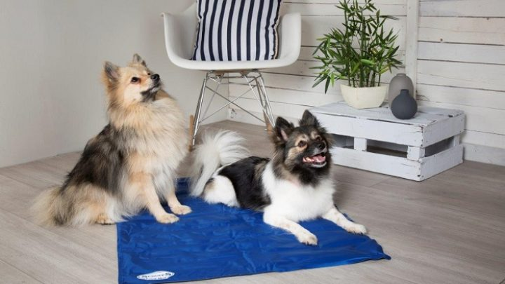 dogs on Cooling Mat