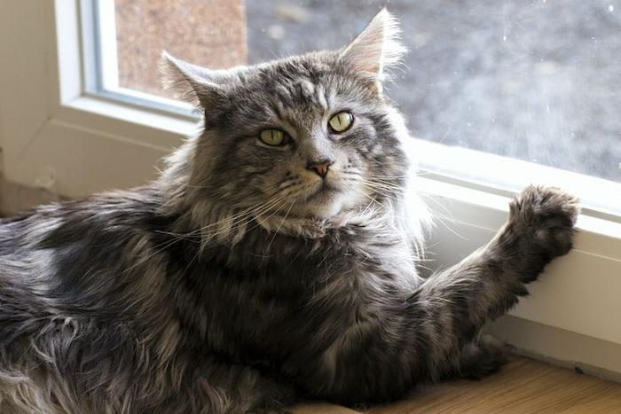cat sitting next to the window