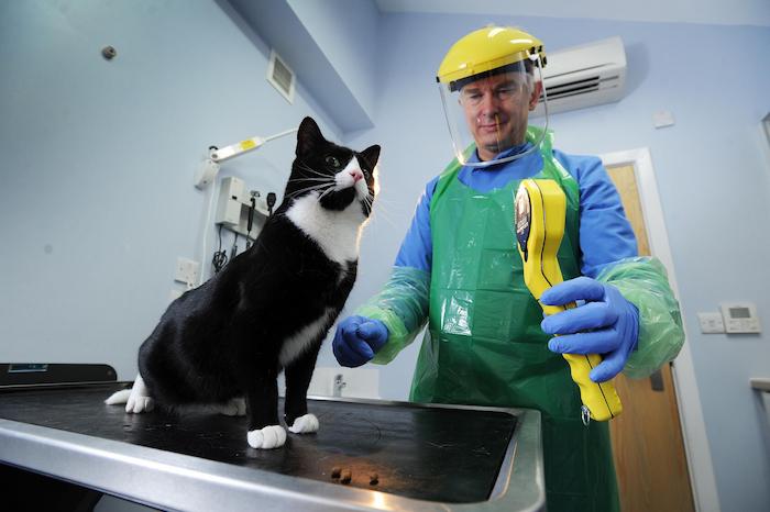 radioactive iodine for cats