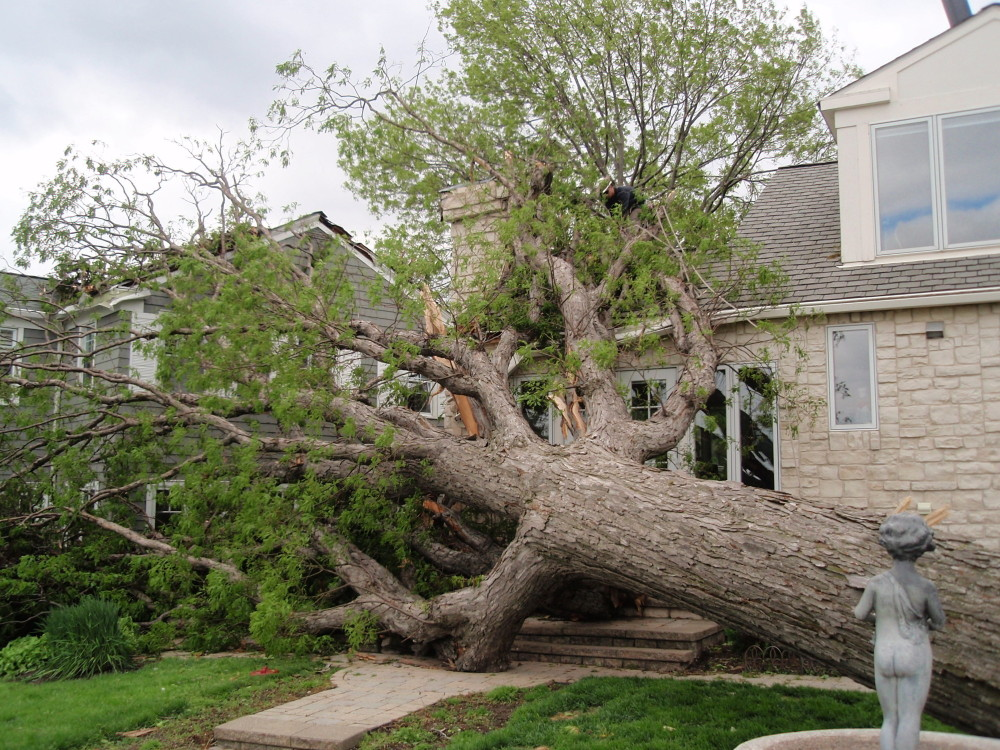 damaged tree from storm